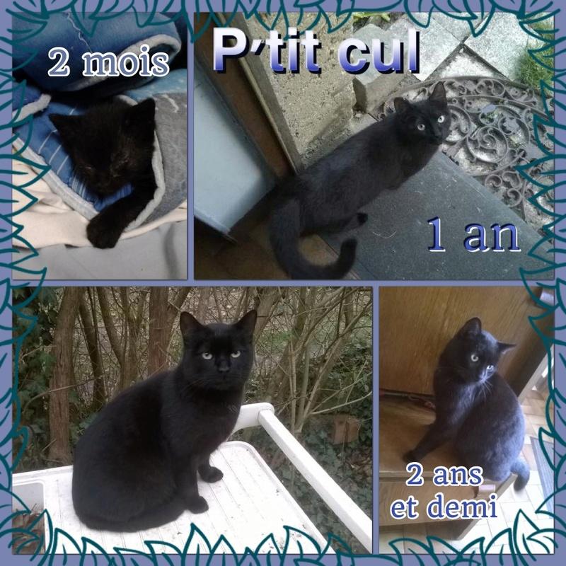 Spécials Photos : Avant/Après de nos chats - Page 15 P_tit_10