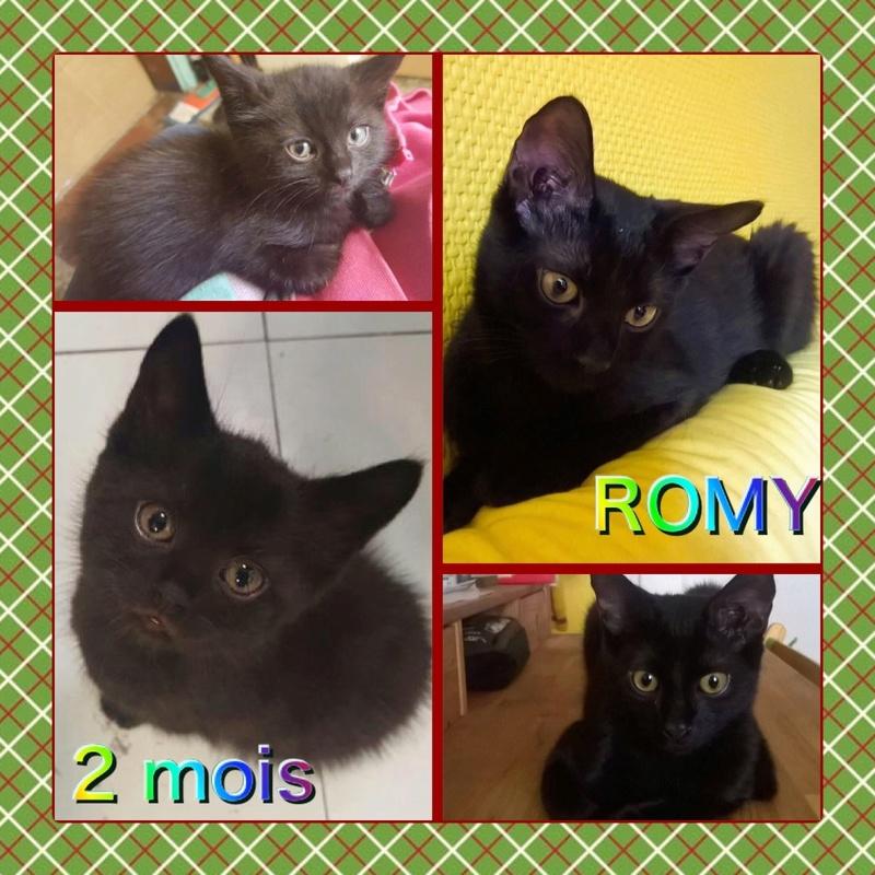 Spécials Photos : Avant/Après de nos chats - Page 15 Romy10
