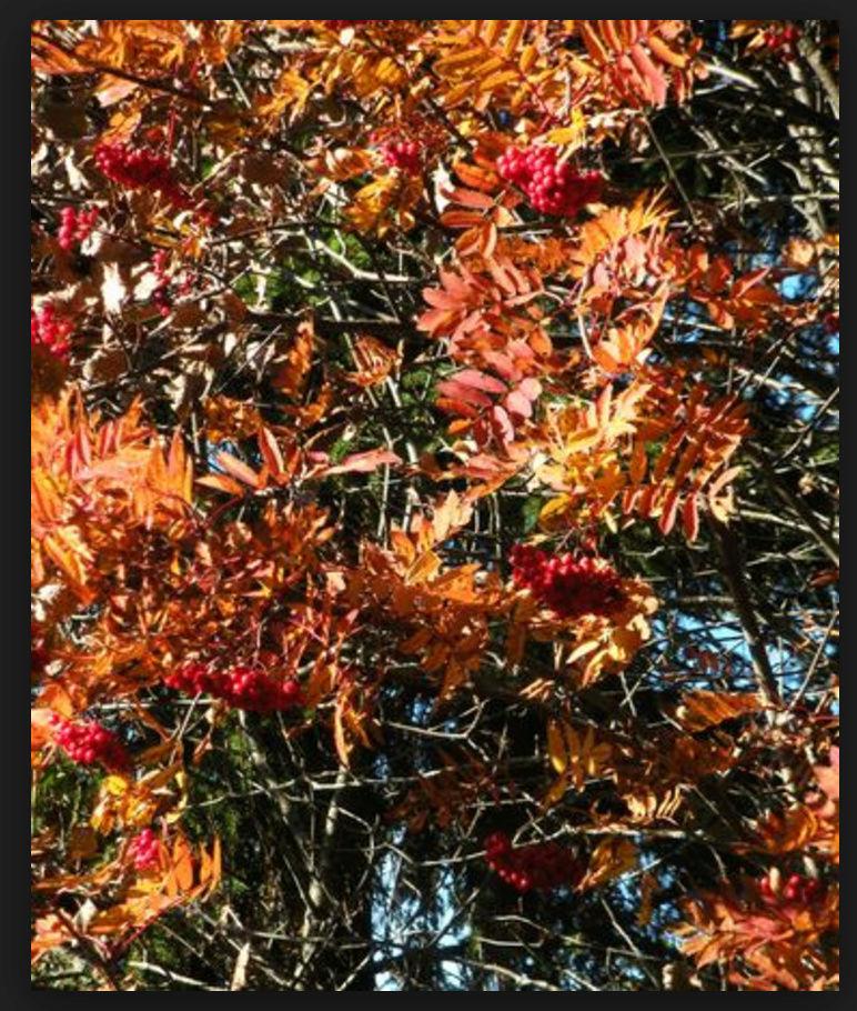 Quizz sur les arbres Screen10