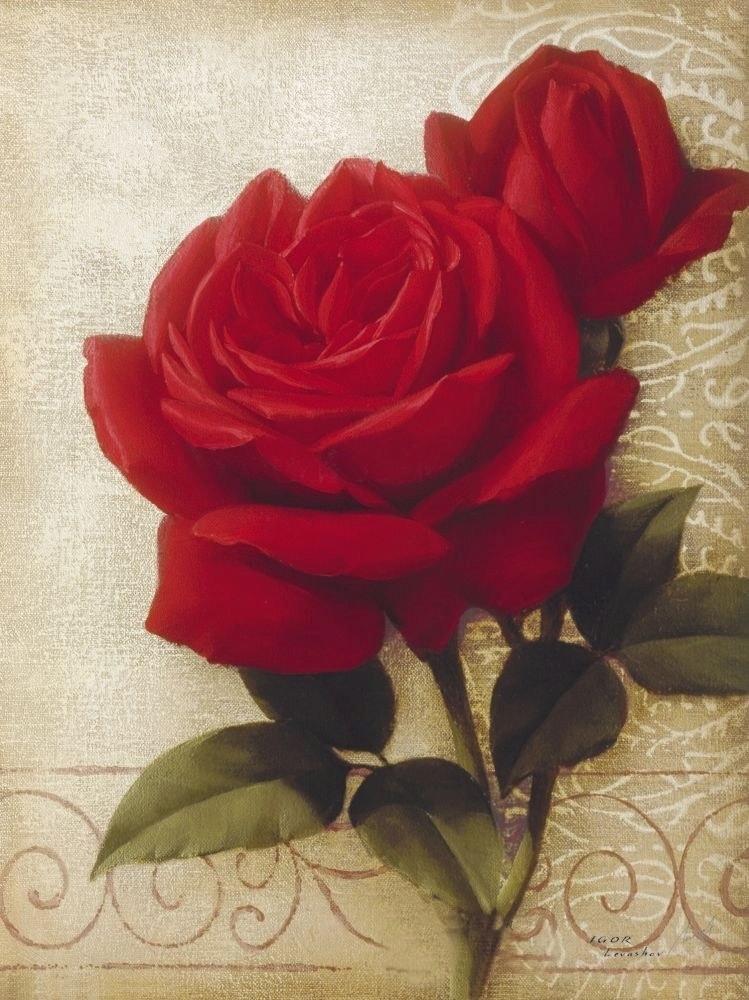 Le doux parfum des roses - Page 2 Igor_l13