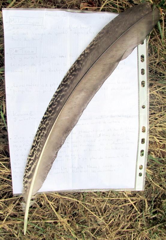 Plume à identifier 1-plum10