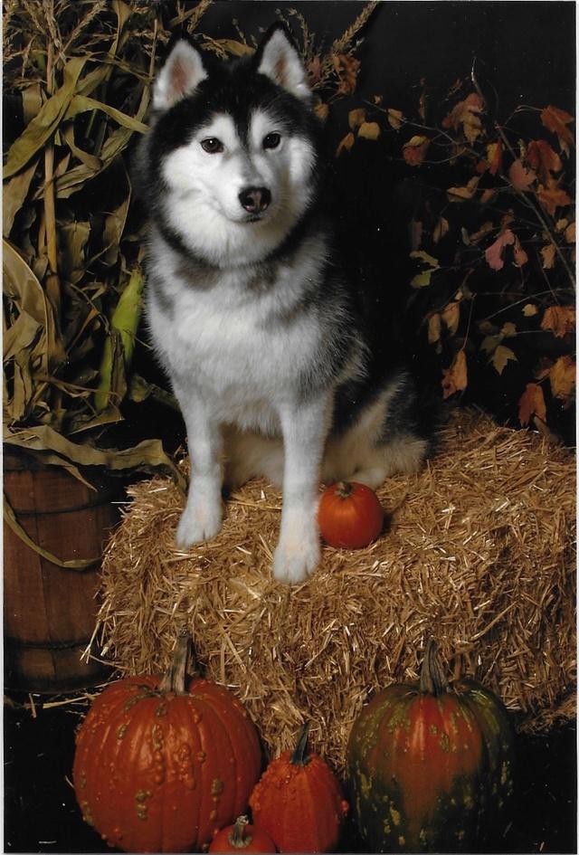 Pumpkin Carving Time Bodhih10