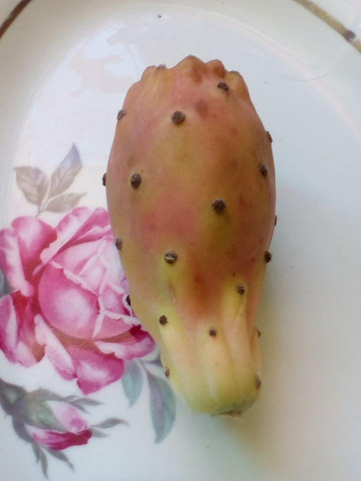 Opuntia Indica bientot des fruits! :) - Page 2 5_oct_10