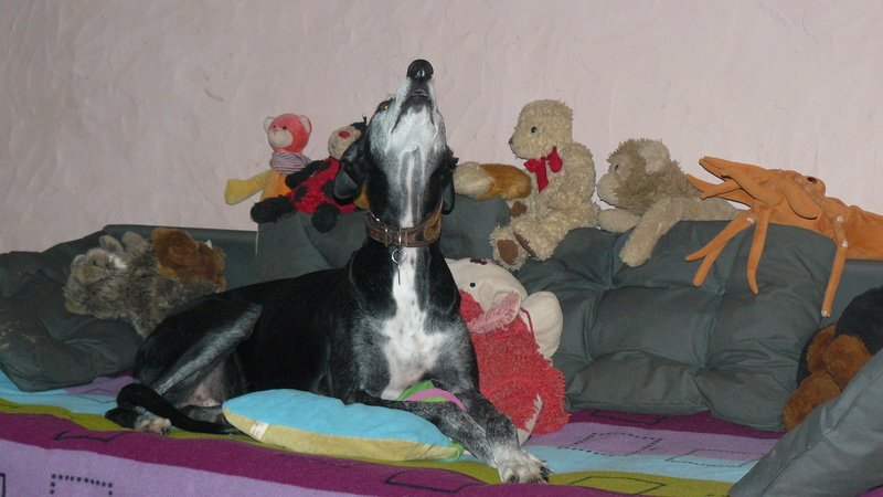 Florence Squelette de Merida à l'adoption  Scooby France    Adoptée  - Page 13 004_210