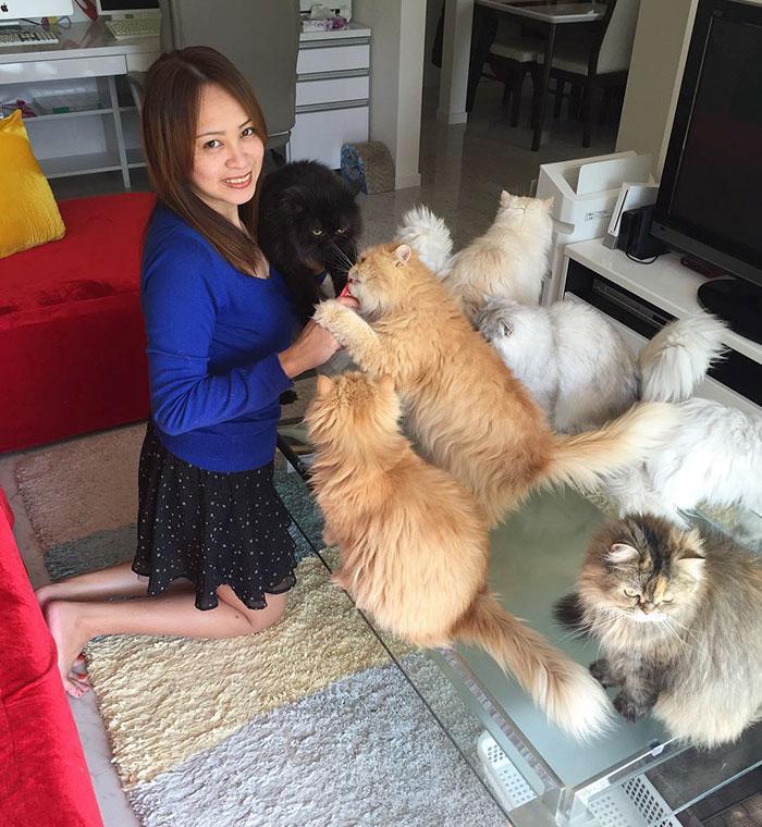 Cats Lady et ses 12 chats persans 14753310