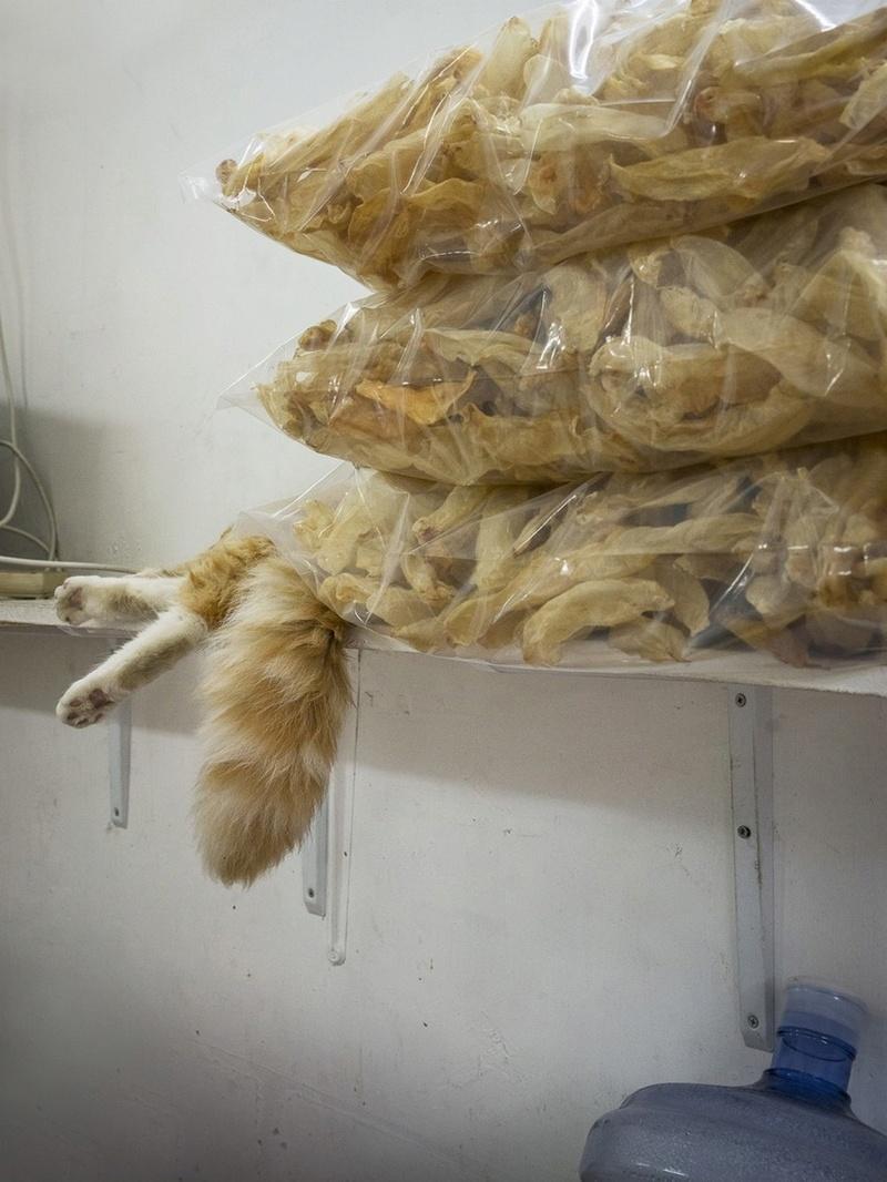Les chats de boutiques Chats-10