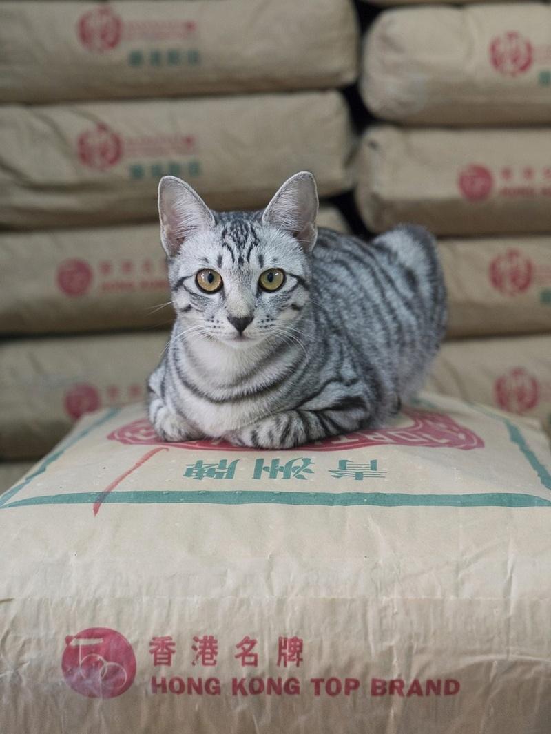 Les chats de boutiques Chats-11