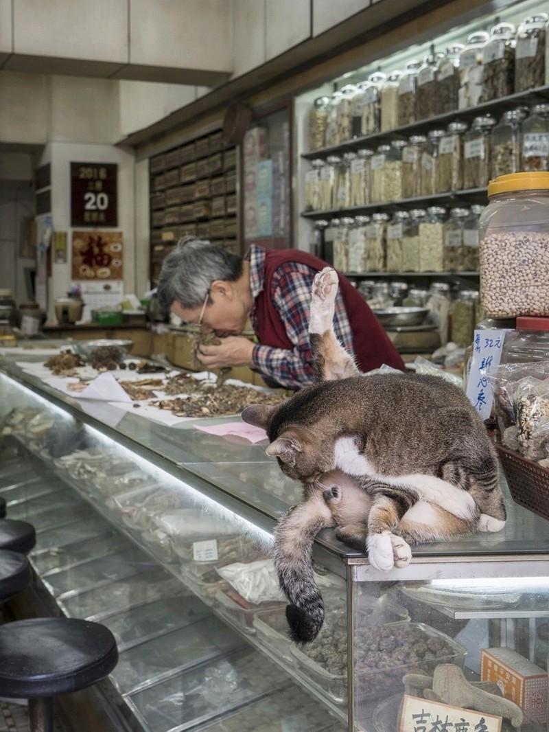 Les chats de boutiques Chats-13