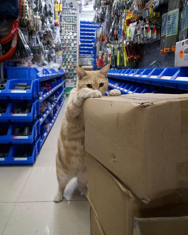 Les chats de boutiques Chats-15