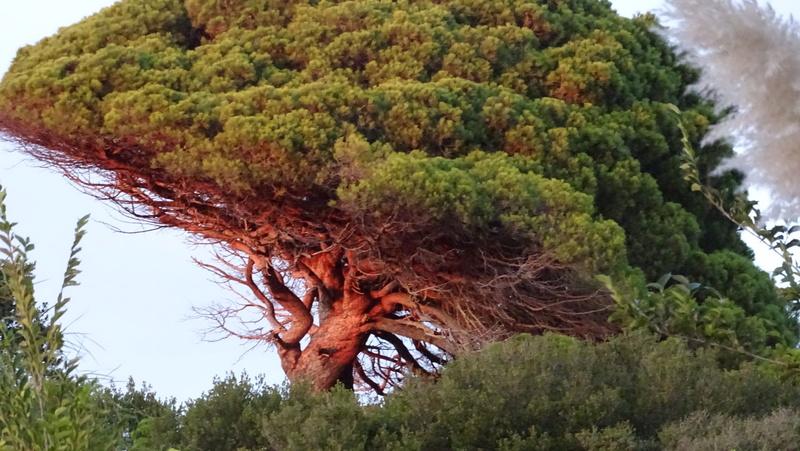 Photos Sardaigne Dsc00511