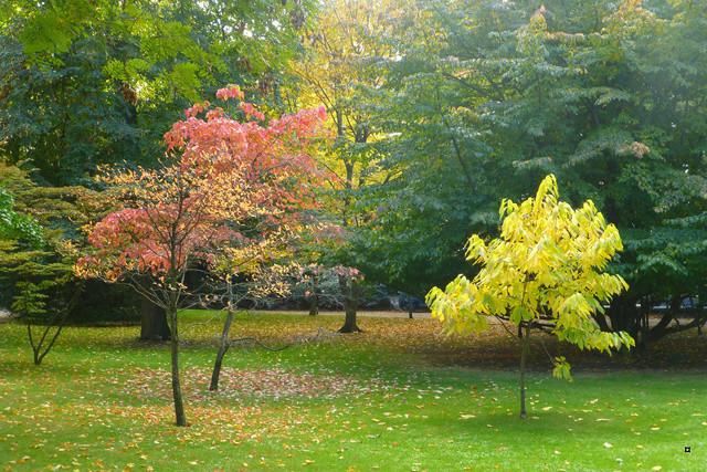 Choses vues dans le jardin du Luxembourg, à Paris - Page 5 Automn10
