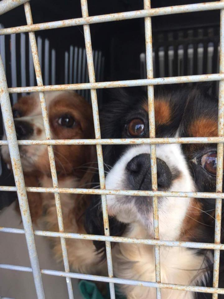 Sauvetage 7 petits chiens le 07 octobre 2016  Temp37