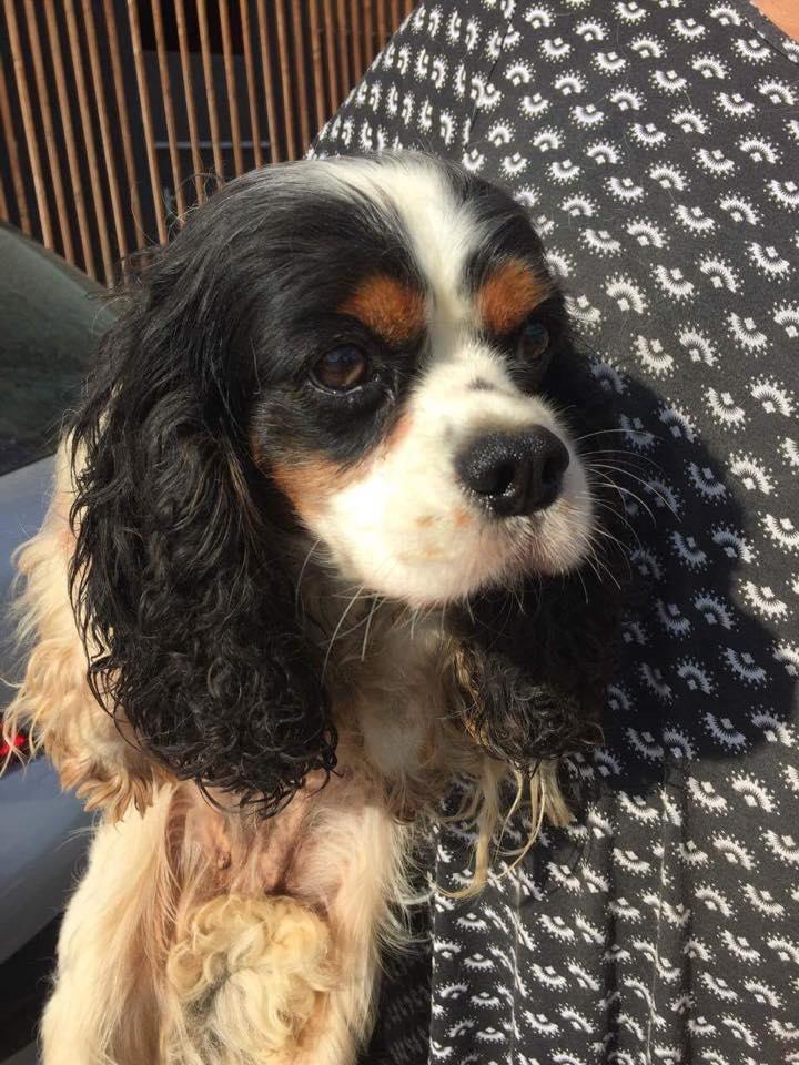 Sauvetage 7 petits chiens le 07 octobre 2016  Temp38