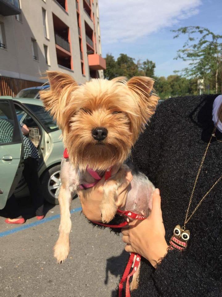 Sauvetage 7 petits chiens le 07 octobre 2016  Temp39