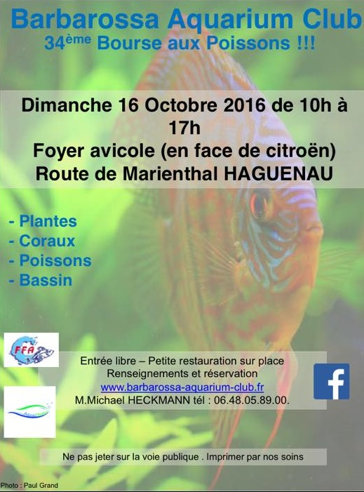 Bourse à Haguenau (67) - 16 octobre 2016  14184410