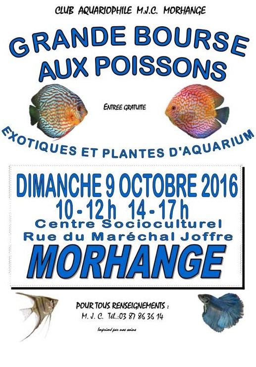 Bourse de Morhange (57) - 9 octobre 2016 14237610