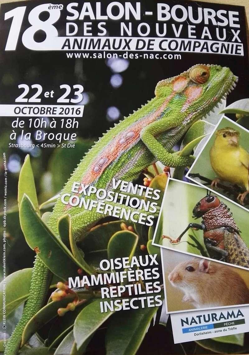Bourse La Broque- 22-23 Octobre : Nvx animaux de compagnie 14248010