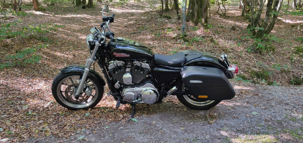vend sportster xl 1200t superlow Img_2039