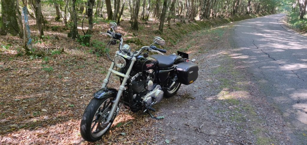 vend sportster xl 1200t superlow Img_2040