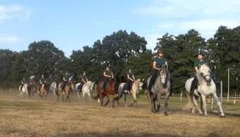 Virtuelles Reiterstübchen