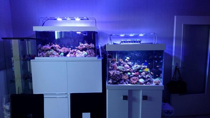 les 500 litres d'eau de mer d'angy et ced  Dsc_0712