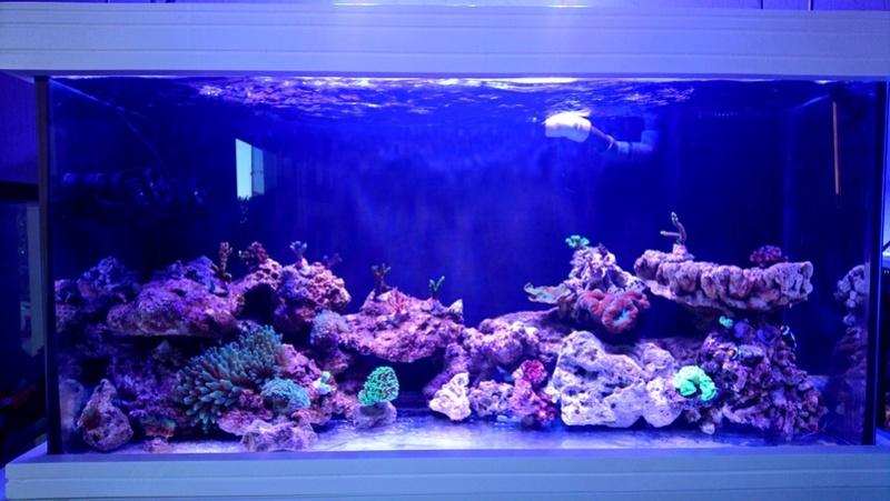 les 500 litres d'eau de mer d'angy et ced  Dsc_0713