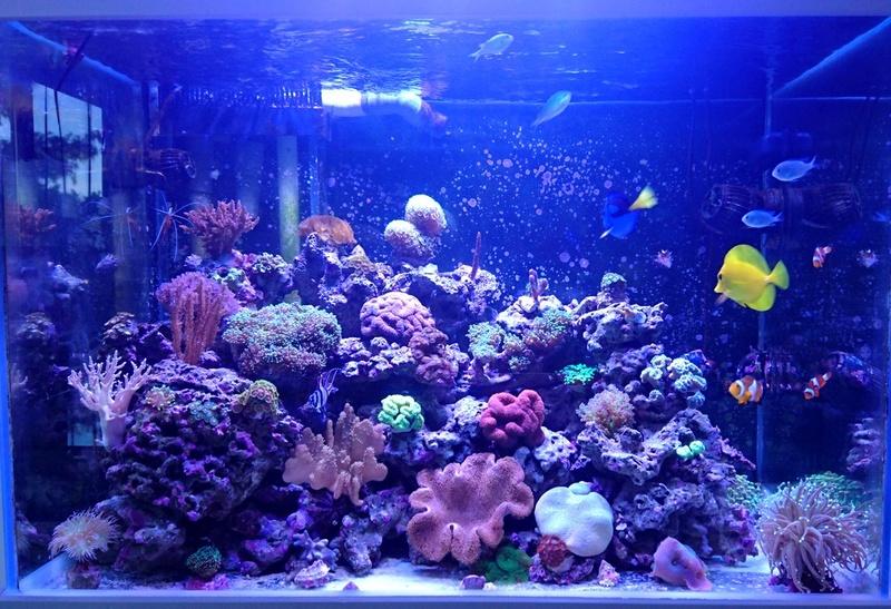 les 500 litres d'eau de mer d'angy et ced  Dsc_0714