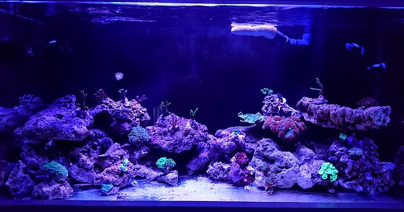 les 500 litres d'eau de mer d'angy et ced  - Page 2 Dsc_0717