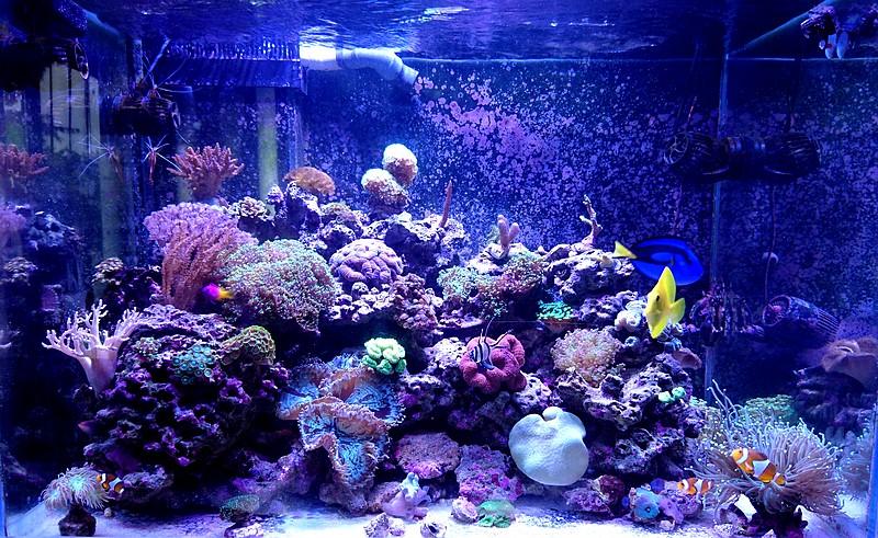les 500 litres d'eau de mer d'angy et ced  - Page 2 Dsc_0810