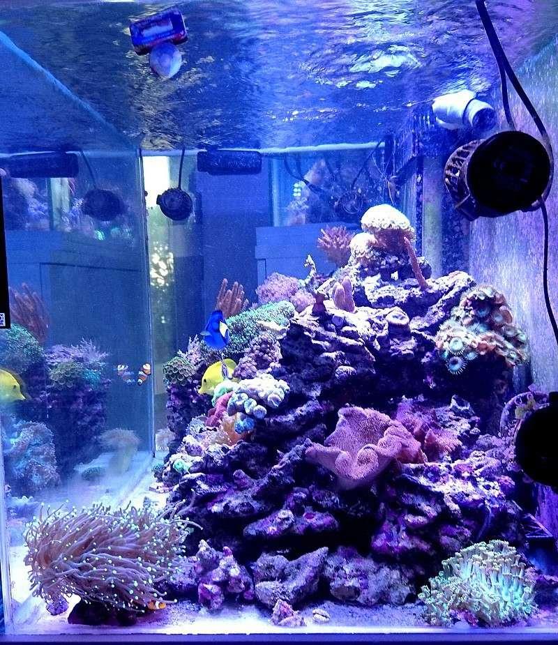 les 500 litres d'eau de mer d'angy et ced  - Page 2 Dsc_0812