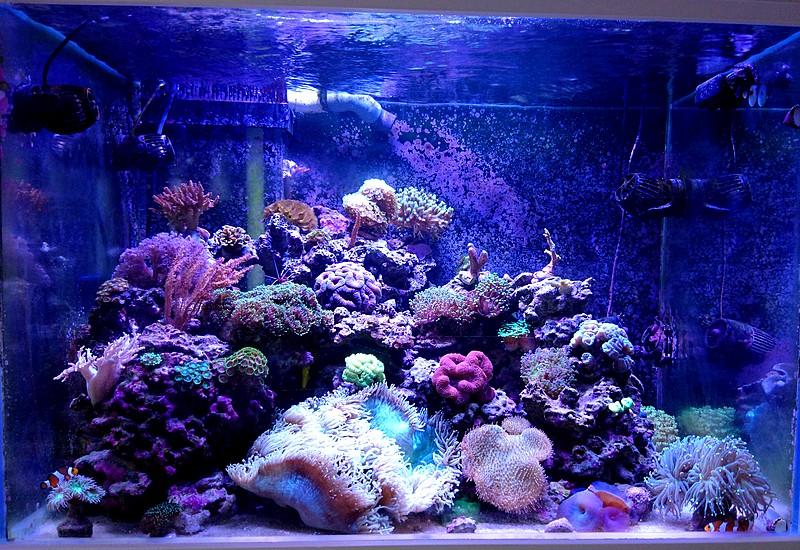 les 500 litres d'eau de mer d'angy et ced  - Page 2 Dsc_0914