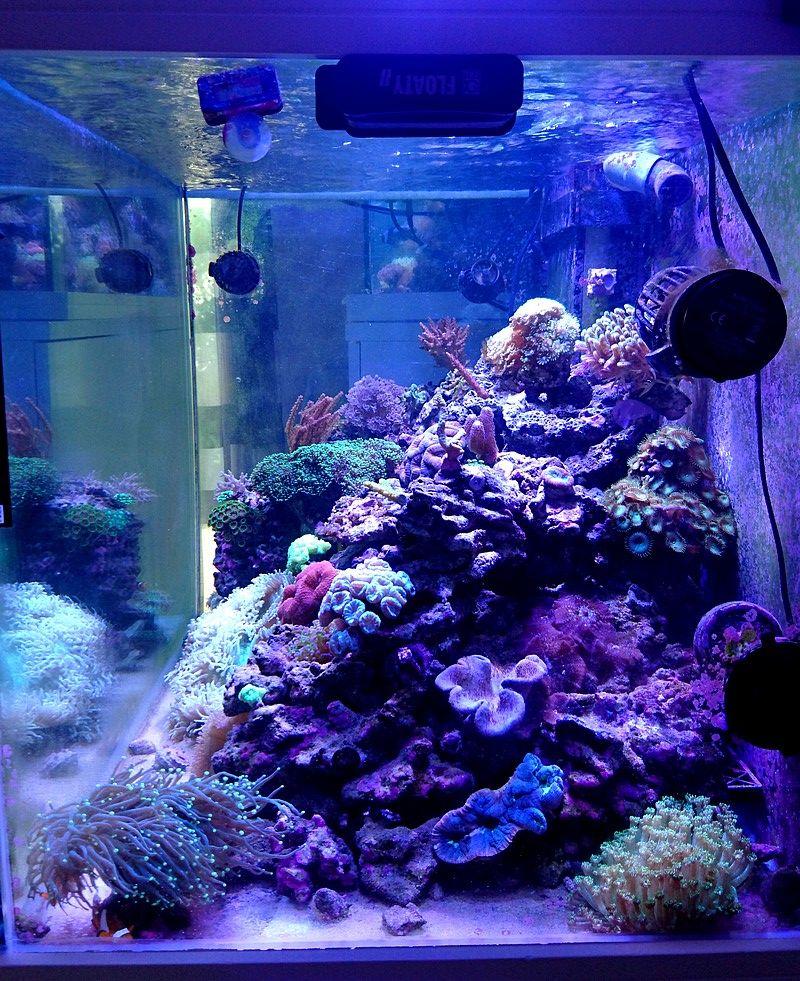 les 500 litres d'eau de mer d'angy et ced  - Page 2 Ve3fd710