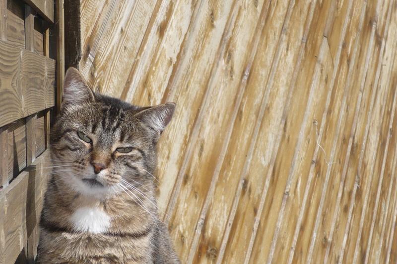 THEMIS, née en janvier 2010 - Page 5 P1080429