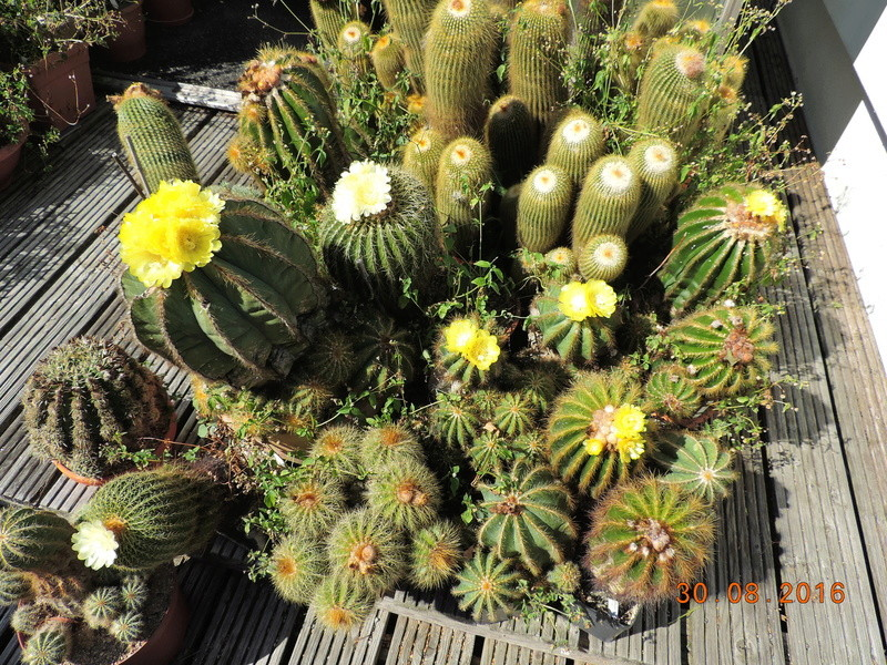 Cacti and Sukkulent in Köln, every day new flowers in the greenhouse Part 151 Bild_178