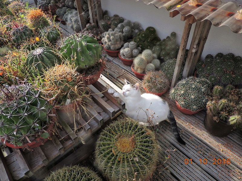Cacti and Sukkulent in Köln, every day new flowers in the greenhouse Part 151 Bild_313