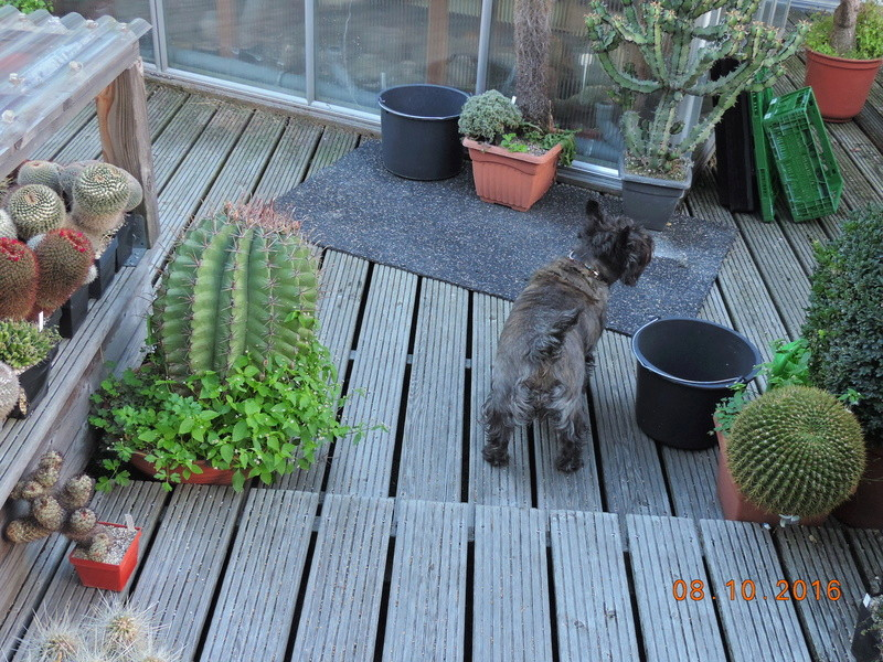 Cacti and Sukkulent in Köln, every day new flowers in the greenhouse Part 152 Bild_325