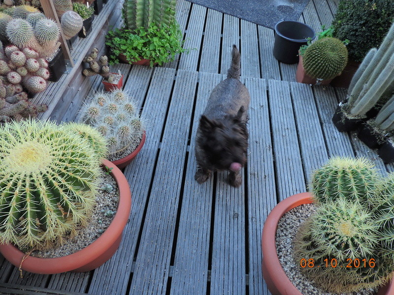 Cacti and Sukkulent in Köln, every day new flowers in the greenhouse Part 152 Bild_326