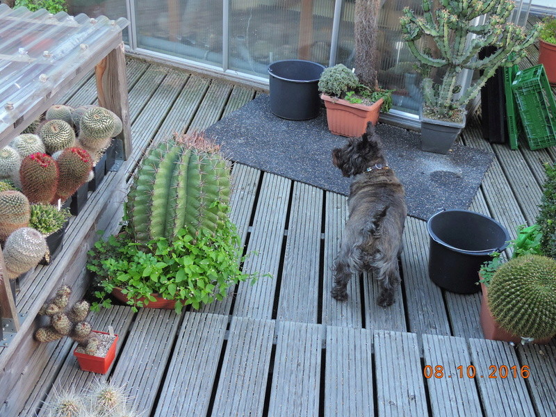 Cacti and Sukkulent in Köln, every day new flowers in the greenhouse Part 152 Bild_327