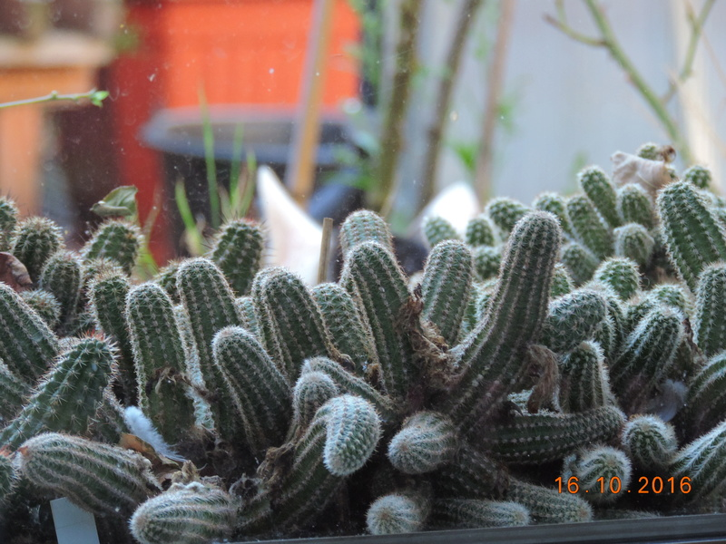 Cacti and Sukkulent in Köln, every day new flowers in the greenhouse Part 152 Bild_370