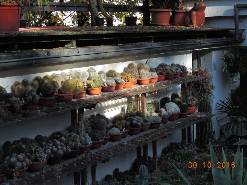 Cacti and Sukkulent in Köln, every day new flowers in the greenhouse Part 152 Bild_458