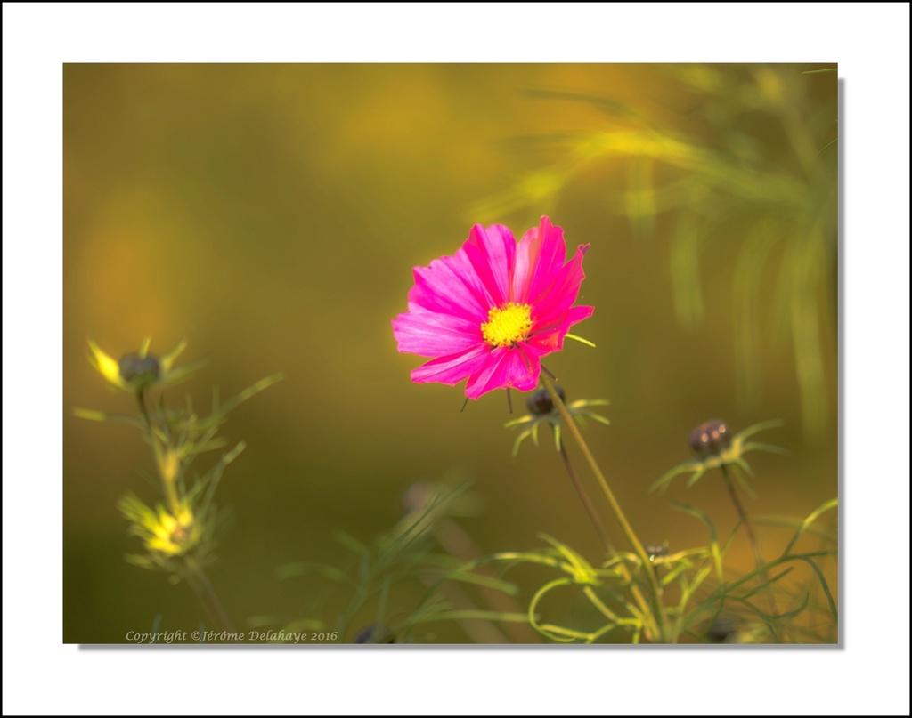 Fleurs d'automne Pa300010