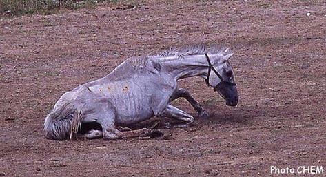 Les chevaux, se cacheraient-ils donc pour mourir ? Chevau10