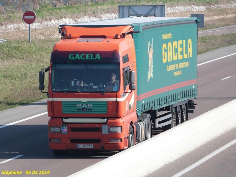 Gacela  (Irun) - Page 2 P1200526