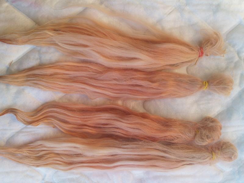 Mes teintures naturelles et wig - tuto Phytolacca americana Wig_v211
