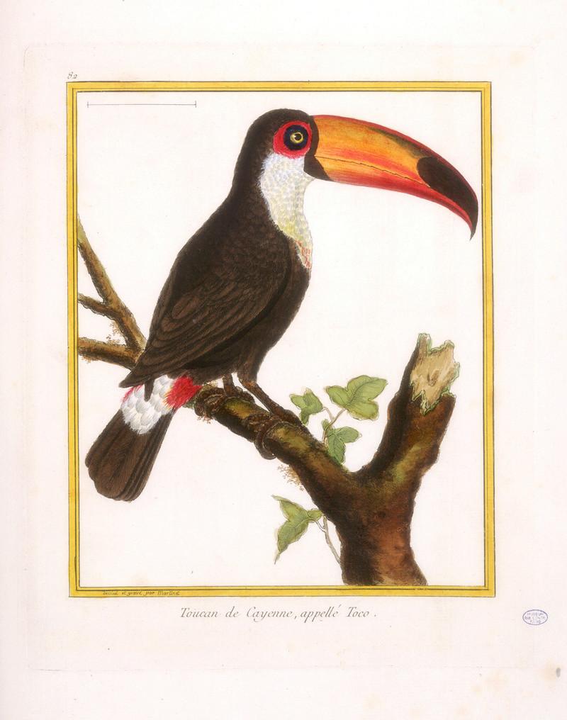 Expo Les services aux oiseaux Buffon du Cte Moïse de Camondo 16-54010