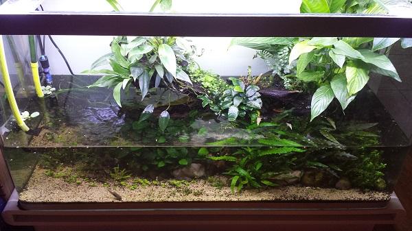 Mur végétal avec aquarium de 320L ---> Paludarium - Page 16 2010