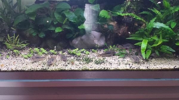 Mur végétal avec aquarium de 320L ---> Paludarium - Page 16 2410