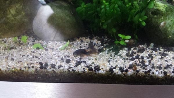 Mur végétal avec aquarium de 320L ---> Paludarium - Page 16 2510