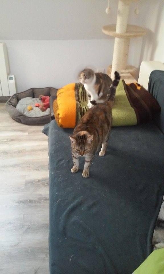 Ava tricolore et Amber tricolore et blanche - nées en 2011 e 14445710