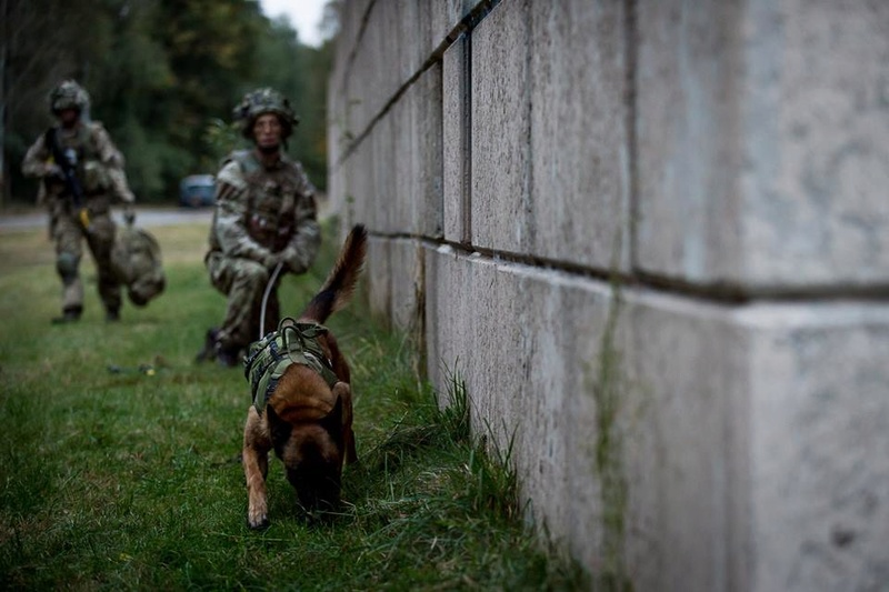 Animaux soldats - Page 6 61j45